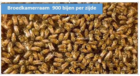 Kerngetallen In Het Bijenvolk Imkeropleidingen Salland